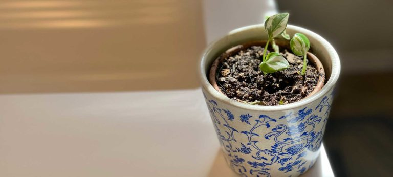 Plant growth vase